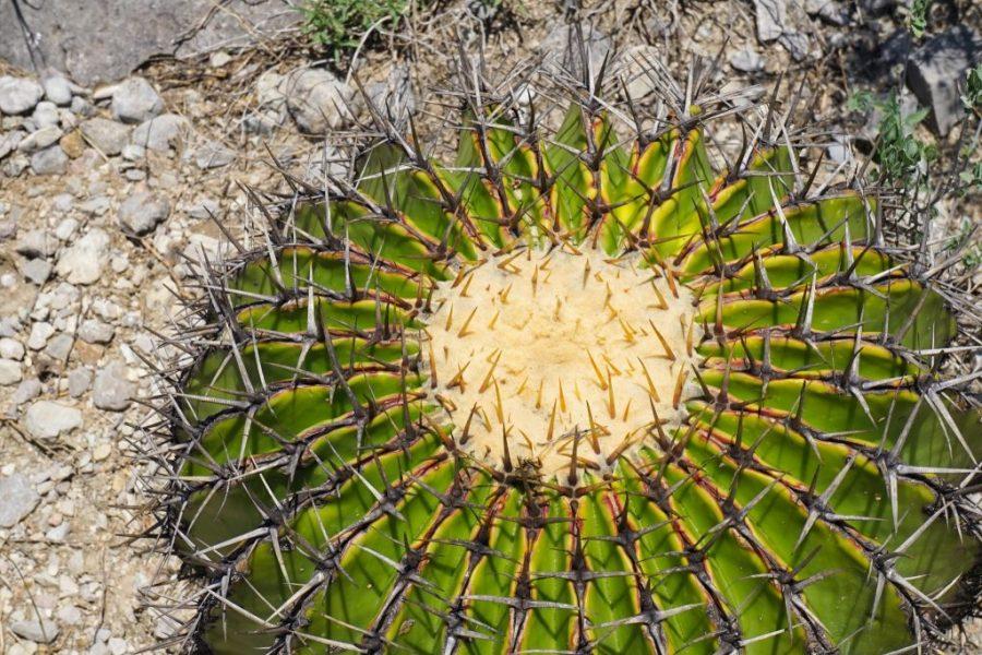 Cactus Mexico