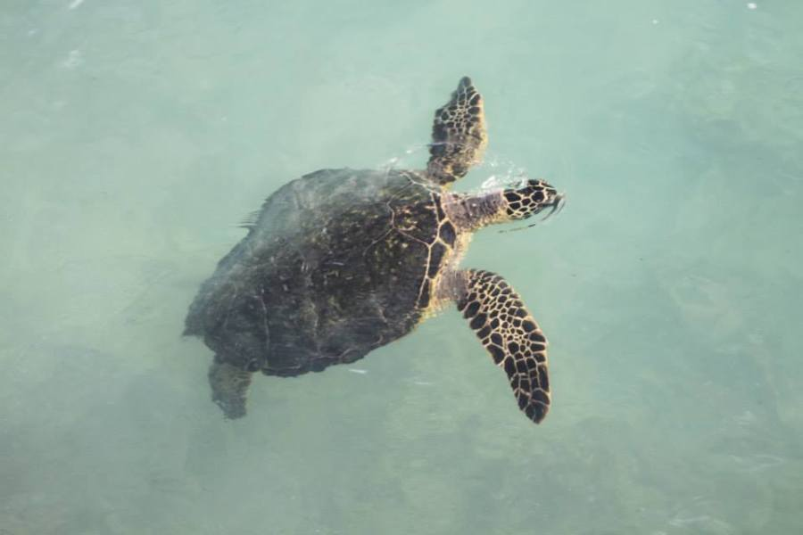 Best way to see hawaii with turtles.