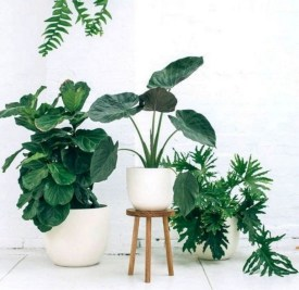 15+ Amazing Nature Decoration In Your Home With Beautiful Indoor Plants Idea 18