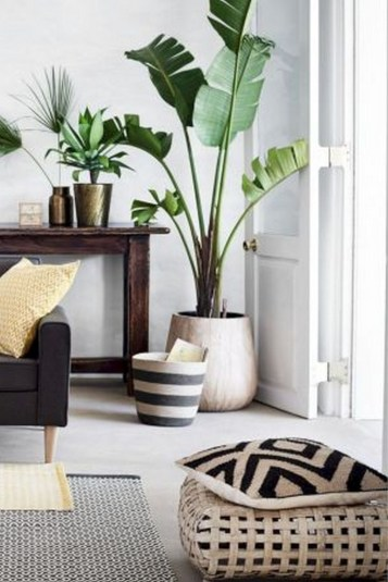 15+ Amazing Nature Decoration In Your Home With Beautiful Indoor Plants Idea 20