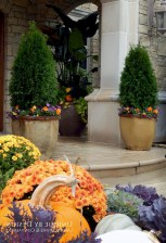 88+ Amazing Fall Container Gardening Ideas (60)