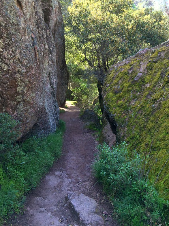Family Friendly Hiking Bear Gulch Trail