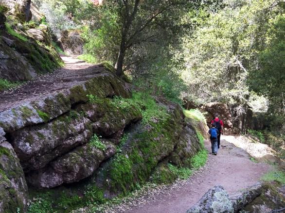 High Peaks Trail Shady Switchbacks