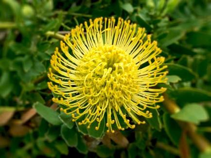 Flowers in Monterey's Secret gardens