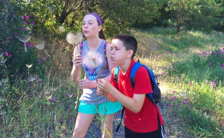 Blowing Dandelions and Hiking In Calaveras County