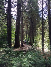 Calaveras Big Trees State Park Hiking