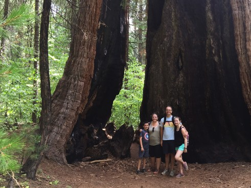 Family-Friendly Hiking at Calaveras Big Trees