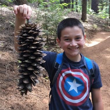 Giant Sequoia Pinecone