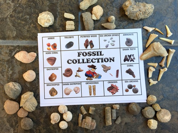 Kids Activities, Mining For Fossils
