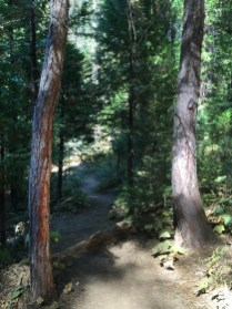 North Fork Falls Hiking Trail at Emigrant Gap
