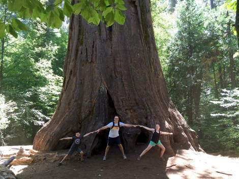 The Agassiz Tree at Calaveras Big Trees