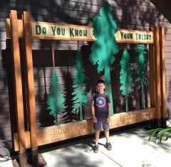 Calaveras Big Trees Museum