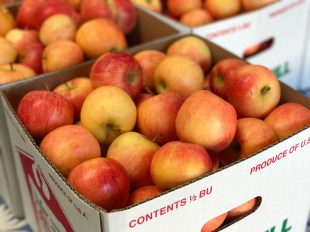 Boxes of Apple Hill Apples From Rainbow Orchards