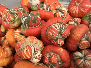 Fall Harvest Gourds