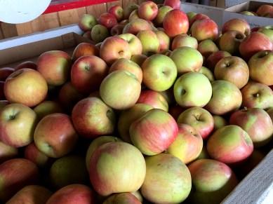 Fuji Apples From Boa Vista Orchards at Apple Hill, California