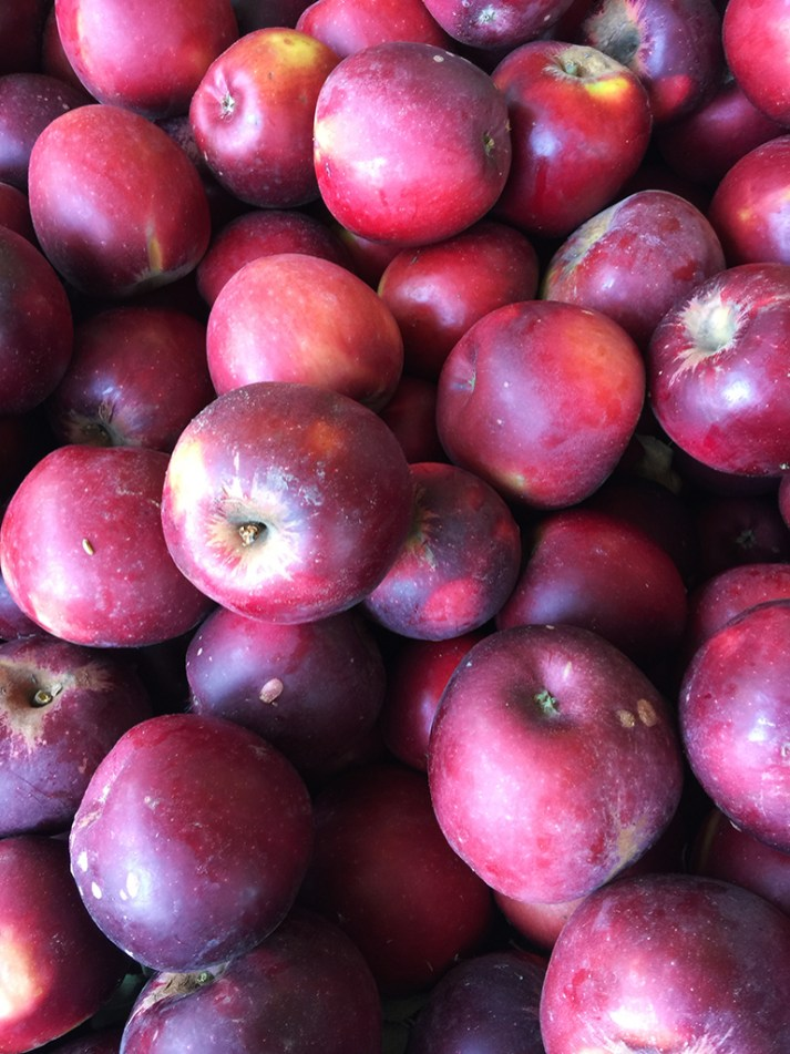 Red Delicious Apples at Apple Hill