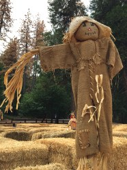Fall Harvest Scarecrow and Kids Hay Maze at Apple Ridge Farms