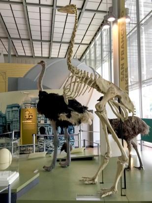 Kimball Natural History Museum