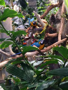 Tropical Birds in the Osher Rainforest Exhibit at the California Academy of Sciences