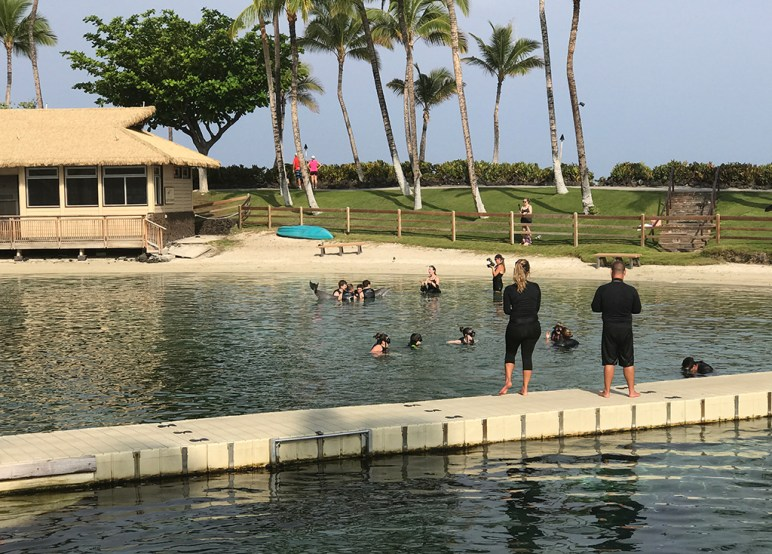 Dolphin Quest Groups at the Hilton Waikoloa Village