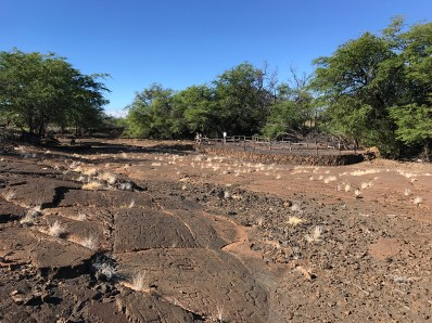 Visit the Puako Petroglyph Preserve