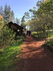 Walking Trails through Daffodils