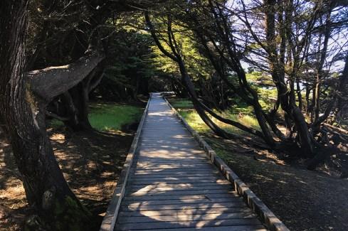 Accessible Laguna Point Boardwalk at MacKerricher State Park
