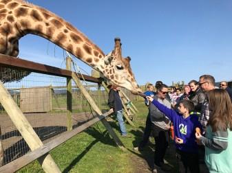 Carter Bourn Feeding a Giraffe