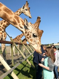 Natalie Bourn Trying To Feed a Giraffe