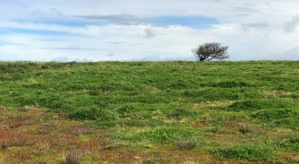 Grassy Headlands Above Noyo Harbor