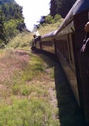 Skunk Train On The Tracks