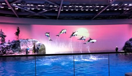 One World Dolphin Show at the Shedd Aqaurium