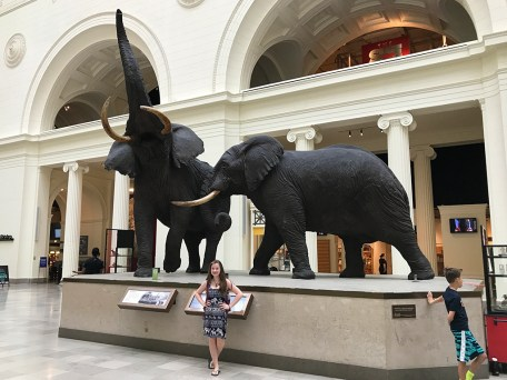 Natalie Bourn with Elephants in Chicago