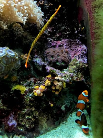 Ocean Science at the Chicago Aquarium