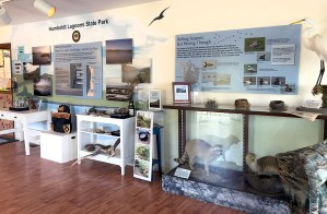 Humboldt Lagoons State Park Visitor Center Exhibits