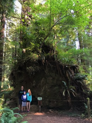New Growth on a Fallen Host Redwood