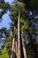 Prairie Creek State Park Redwoods