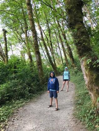 Trail to Fern Canyon