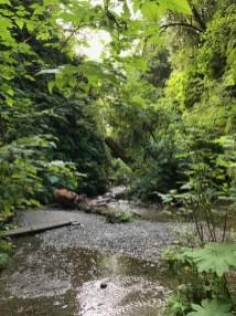 Walking THrough Fern Canyon in Prairie Creek Redwoods State Park