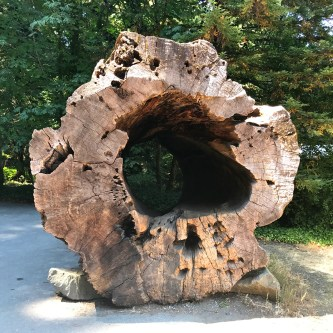 A Massive Redwood Log With a Hole In It