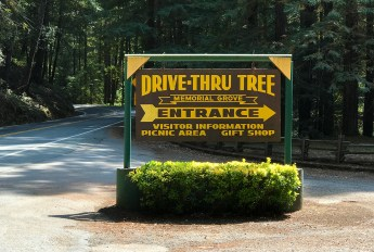 Chandelier Drive-Thru Tree Entrance Sign