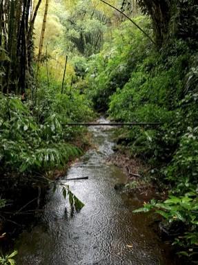 Kahuna Falls and Akaka Falls Trail