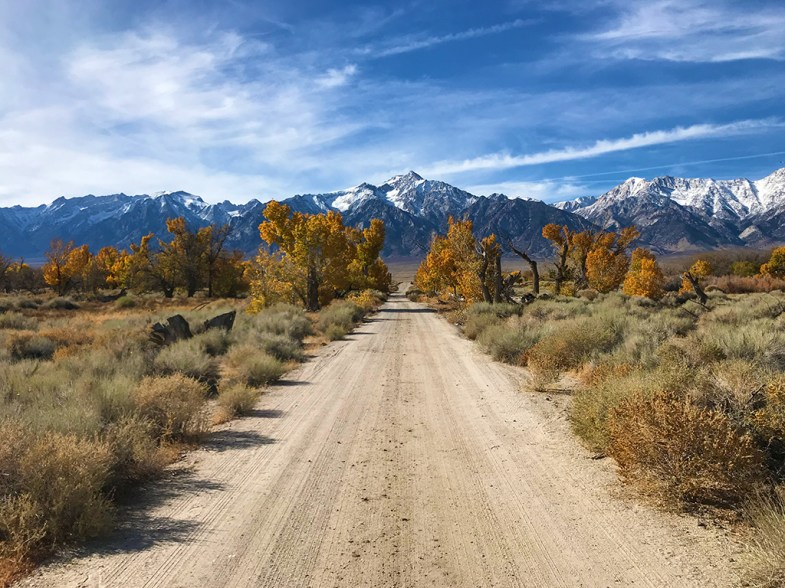 Autumn Trees and the Sierra Nevada View from Manzanar