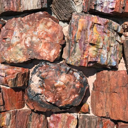 Agate House Walls Made Of Petrified Wood