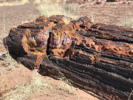 Colorful Petrified Log