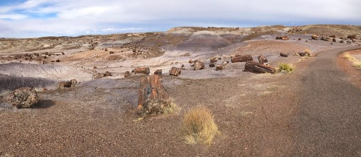 Crystal Forest Trail at Petrified Forest National Park