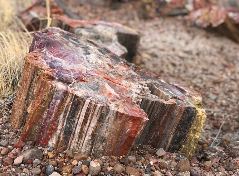 Giant Logs Trail Petrified Wood