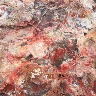 Jim Gray's Petrified Wood