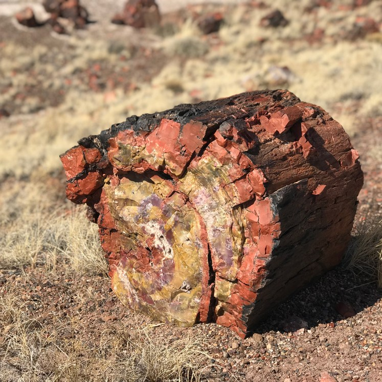 Piece of Petrified Tree Trunk