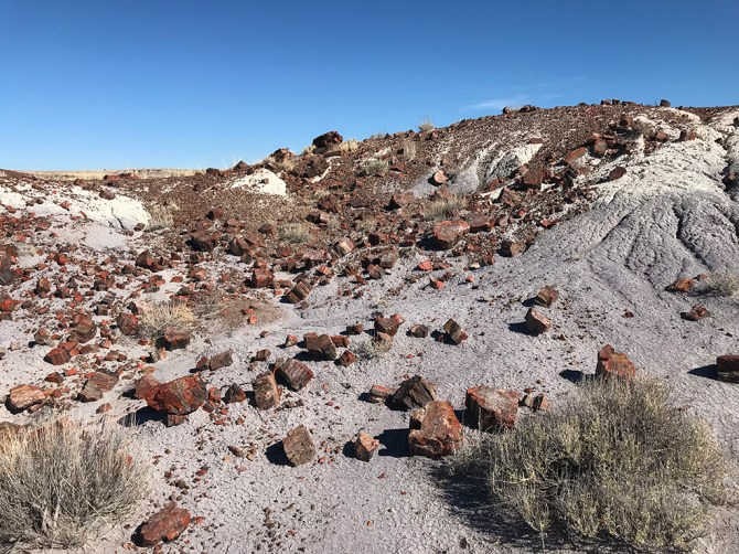 Piles of Rainbow Petrified Wood Strewn Across The Desert